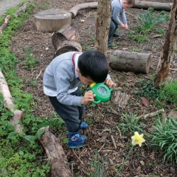 small boy in garden looking at a daffodil